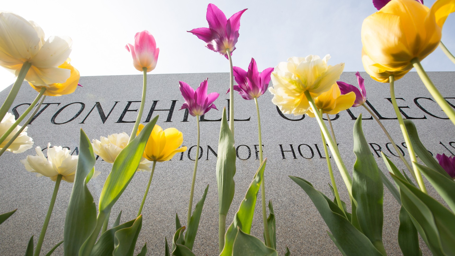 Stonehill College entrance sign with flowers